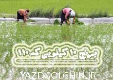 برنج ایرانی هاشمی اعلاء(10کیلو) کد 110