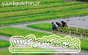 برنج ایرانی طارم نیم دانه کشت دوم (10کیلو) کد111