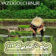 برنج ایرانی طارم سرلاشه درباری درجه یک(10کیلو) کد112