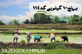 برنج ایرانی طارم فوق اعلاء دودی درجه یک(10کیلو) کد 114